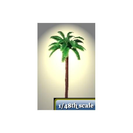 chusan palm tree 70 mm