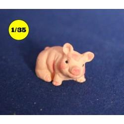 klein varken