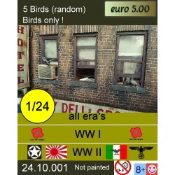 5 random birds, pigeons
